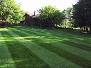 Lawn fertilization quote